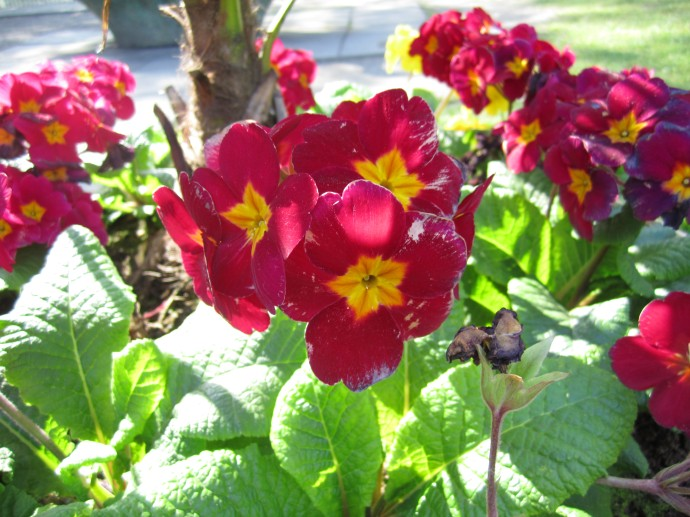 Springtime, Flowers