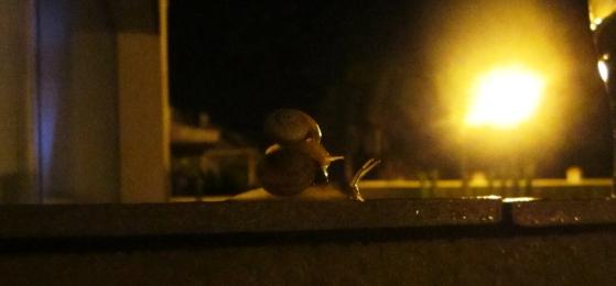 Snail Man, Bob and Tom, Alcaidesa, Spain