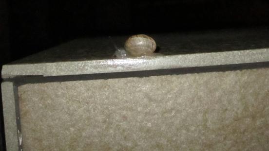 Snail Man, Alcaidesa, Spain, Bob and Tom