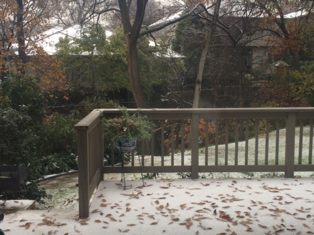 Ice, Snowstorm, Dallas, Lost Kitty, Pets