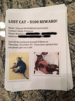 Lost Cat, Pets, Dallas, Ice, Snowstorm