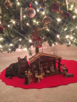 Christmas, Holiday Season, Dallas, Family, Festive